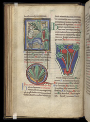Mugwort, Dock, and Dragons, In A Collection Of Medical And Herbal Texts